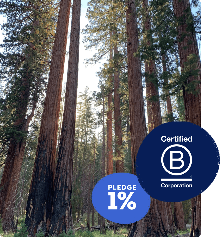 Photo of a forest with B Corp Certification emblem in corner